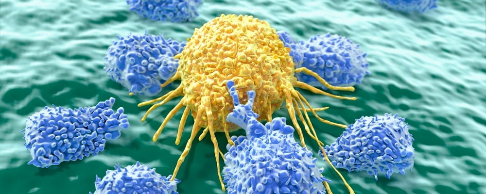 เซลล์เม็ดเลือดขาว wincell research
